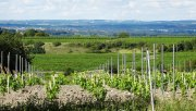 View of the cognac vineyards towards the Charente river, from the top of a hillside of Grande Champagne